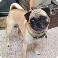 Adopt A Pet :: Herbie - Hinckley, MN