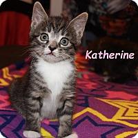 Adopt A Pet :: Katherine 2 - Plainville, MA