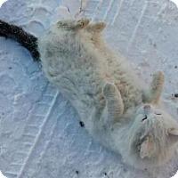 Adopt A Pet :: Leroy - Caistor Centre, ON
