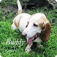 Adopt A Pet :: Buddy - Bartonsville, PA