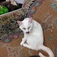 Adopt A Pet :: Bean - Fresno, CA