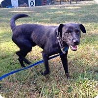 Adopt A Pet :: Raven - Norcross, GA