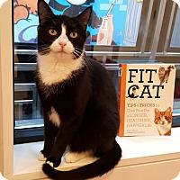 Adopt A Pet :: Freeda - New York, NY