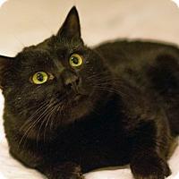 Adopt A Pet :: Ricky, Ready for Love - Brooklyn, NY