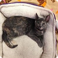 Adopt A Pet :: Leila - River Edge, NJ