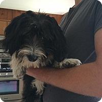 Adopt A Pet :: Jay Jay - selden, NY