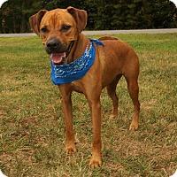 Adopt A Pet :: Bruno - Lexington, NC