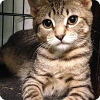 Adopt A Pet :: Camry - East Brunswick, NJ
