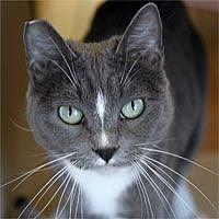 Adopt A Pet :: Clara Bell - Pacific Grove, CA