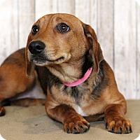 Adopt A Pet :: Jackyn - Waldorf, MD