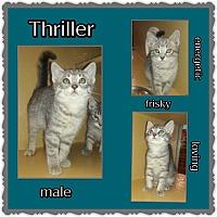 Adopt A Pet :: Thriller - Richmond, CA