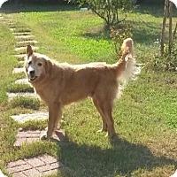 Adopt A Pet :: Lucky G - Irmo, SC