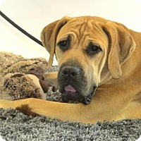 Adopt A Pet :: Jaden ADOPTED - Goodyear, AZ