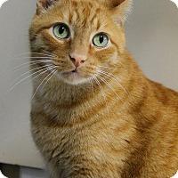 Adopt A Pet :: Jerry - Portland, OR