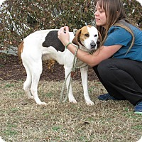 Adopt A Pet :: Alexa - Windsor, VA