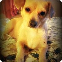 Adopt A Pet :: Coraline - Tijeras, NM