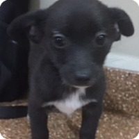 Adopt A Pet :: Houston - Las Vegas, NV