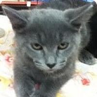 Adopt A Pet :: Annabelle - Riverside, RI
