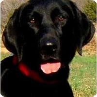 Adopt A Pet :: SAVANNAH(A
