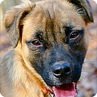 Adopt A Pet :: Jagger - Hastings, NY