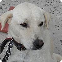 Adopt A Pet :: Chica - San Diego, CA