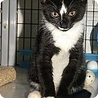 Adopt A Pet :: Ivy - Victor, NY