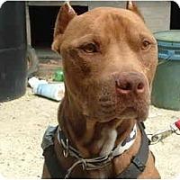 Adopt A Pet :: Rebal - Julian, NC