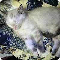 Adopt A Pet :: Sophie - Ocala, FL