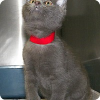 Adopt A Pet :: Jamison - Dover, OH