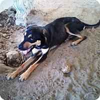 Adopt A Pet :: Dixie  #5 - Graceville, FL