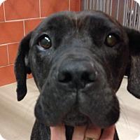 Adopt A Pet :: PRISCILLA - Oswego, IL