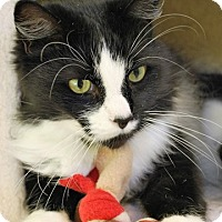 Adopt A Pet :: Angus - Fairfax, VA