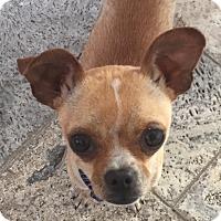 Adopt A Pet :: Chewy - Encinitas, CA