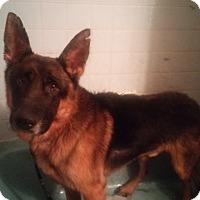 Adopt A Pet :: Burt - Louisville, KY