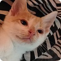 Adopt A Pet :: Tad - Germantown, MD