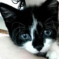 Adopt A Pet :: Vaughn - Austin, TX