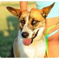 Adopt A Pet :: Banjo - Uxbridge, MA