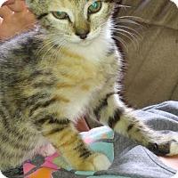 Adopt A Pet :: .Sassy - Baltimore, MD