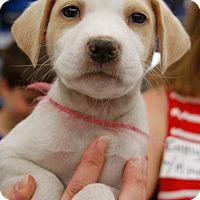 Adopt A Pet :: Mabella - Washington, DC