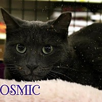 Adopt A Pet :: Cosmic - Hazlet, NJ