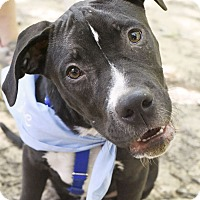 Adopt A Pet :: Yoshi - Chattanooga, TN