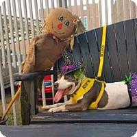 Adopt A Pet :: Bunny - Walton County, GA