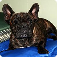 Adopt A Pet :: Cha Cha - Burbank, OH