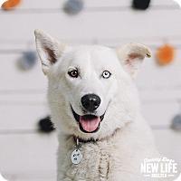 Adopt A Pet :: Wrigley - Portland, OR