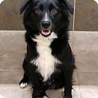 Adopt A Pet :: Benny - Rockingham, NH