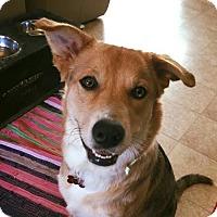 Adopt A Pet :: Kim - Grafton, WI