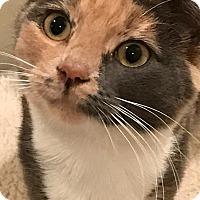 Adopt A Pet :: Pricilla - Philadelphia, PA
