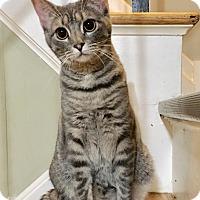 Adopt A Pet :: Genesis - East Brunswick, NJ