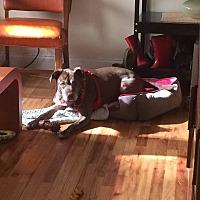 Adopt A Pet :: Peanut - Streamwood, IL