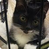 Adopt A Pet :: Talya - Modesto, CA